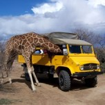 102-Giraffe-Head-in-Unimog